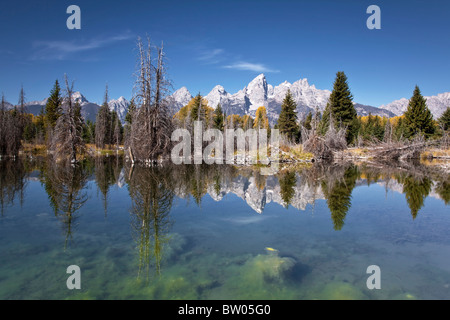 The glorious Grand Teton's reflected in the Beaver pond - Stock Photo