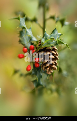 A Festive branch of Holly and red  winter berries with a pine cone - Stock Photo
