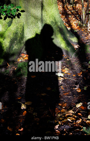 Shadow of the photographer against a tree in woodlands at Grappenhall Heys, Warrington, Cheshire in Autumn - Stock Photo