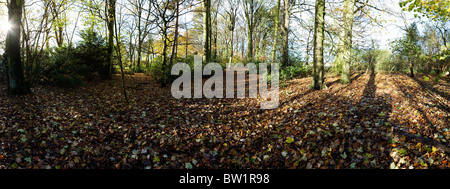 Panoramic view of the footpath walk through a sunny 'bluebell wood' at Grappenhall Heys, Warrington, Cheshire in - Stock Photo