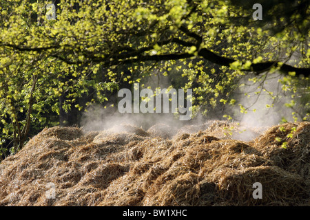 A steaming pile of manure - Stock Photo