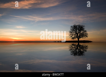 A lone oak tree sits on an island, while its silhouette reflects in the water with a beautiful sunset - Stock Photo