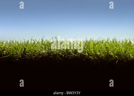 Cross section of lawn showing blades of grass at ground level - Stock Photo