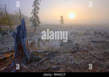 A foggy autumn sunrise on a hoar frost covered pasture in central Alberta, Canada - Stock Photo
