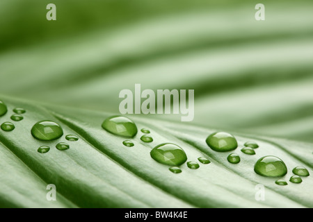 Footprint water drops on leaf - Stock Photo