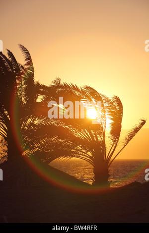 Jordan, county of al-'aqaba, red sea, Royal diving center, and, hotel, resort - Stock Photo