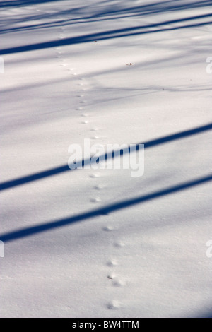 Animal tracks in snow. Near Salt Creek. Cook County, Illinois. Probably left by a fox. - Stock Photo