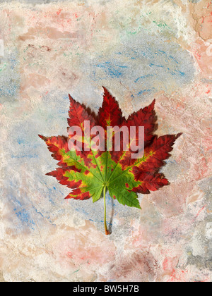 A red and green Maple leaf in Autumn on a painted background - Stock Photo