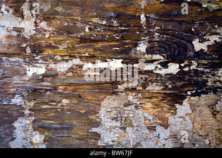 DETAILED ABSTRACT IMAGE OF OLD ROTTEN WOOD Stock Photo