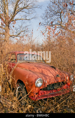 Abandoned Orange Car in Overgrown Field - Stock Photo