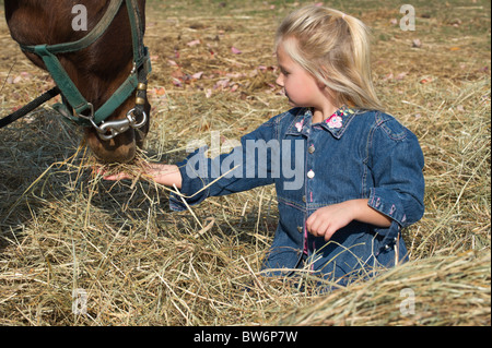 Young blonde girl feeding hay to her large quarter horse companion, 4-5 years. - Stock Photo