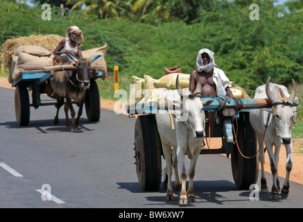Ox-carts in Trichy, Tamil Nadu province, South India. - Stock Photo