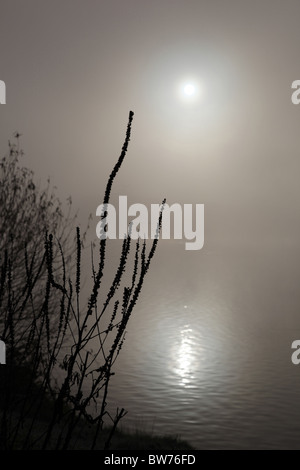 Silhouetted waterside plants with a backdrop the sun reflecting on a misty lake  dying - Stock Photo