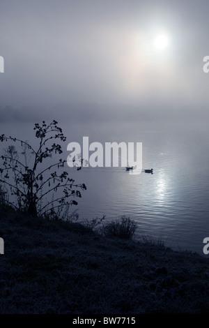 Two ducks swimming across a foggy lake - Stock Photo