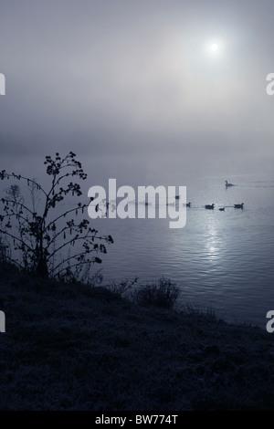 Ducks swimming across a foggy lake - Stock Photo
