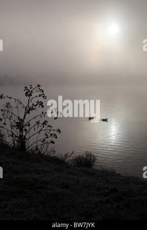Two ducks swim across a dark misty lake - Stock Photo