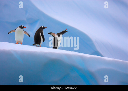Gentoo penguins on iceberg (Pygoscelis papua) Antarctic Peninsula - Stock Photo