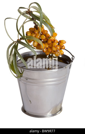 Oil of sea-buckthorn berries. Branch of a plant and oil. - Stock Photo