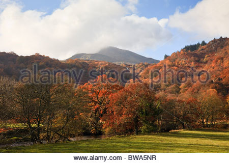 Moel Siabod mountain in low cloud beyond trees in autumn colour in Snowdonia National Park country side. Capel Curig, - Stock Photo