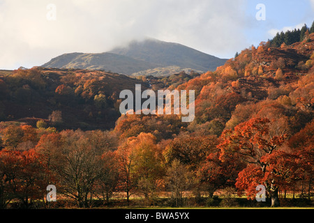 Moel Siabod mountain in low cloud beyond autumn trees in Snowdonia National Park country side.  Capel Curig, Conwy, - Stock Photo