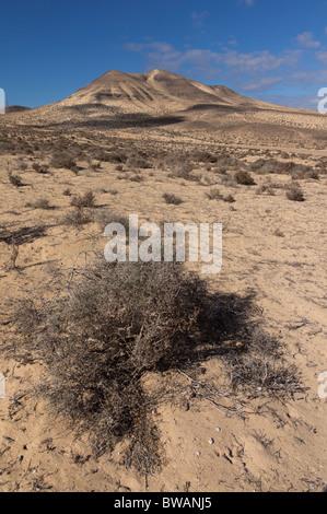 Fuerteventura, Canary Islands - El Jable desert sand dunes on the Jandia peninsula, protected environment - Stock Photo