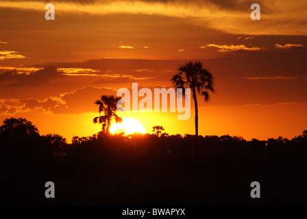 Sunset in Botswana's Okavango Delta on Chief's Island - Stock Photo