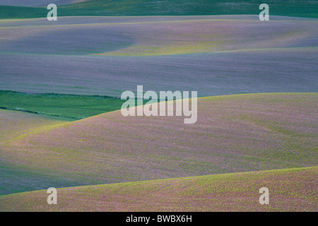 Field Patterns at Dawn, Palouse, Washington State, USA - Stock Photo