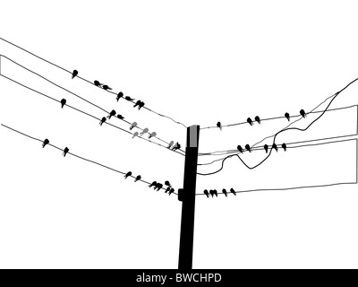 vector silhouette swallow on wire stock photo 41830754 alamy rh alamy com Upper Airway Anatomy Diagram Upper Airway Anatomy Diagram