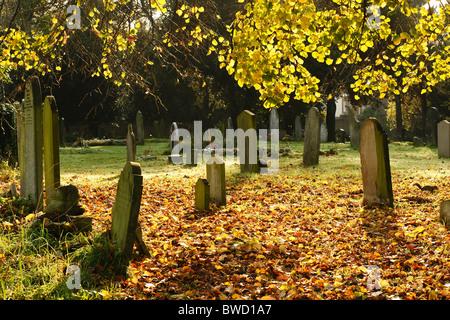 Autumn at Brompton Cemetery, Chelsea, London - Stock Photo