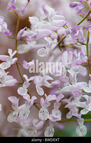 Small soft lilac orchid flowers - Stock Photo