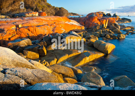 Red lichen covered rocks at Cosy Corner in the Bay of Fires on Tasmania's East Coast - Stock Photo