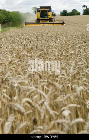 Combine harvester in wheat field - Stock Photo