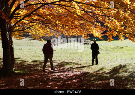 Autumn / fall colors in the Sibillini National Park,Le Marche,Italy. - Stock Photo