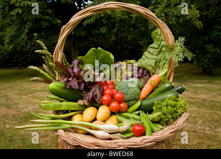 Colourful basket trug of locally grown freshly picked summer vegetables in country garden with trees in the Weald - Stock Photo