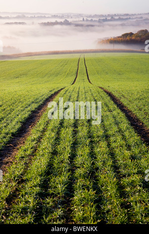 Misty morning view of Kentish countryside with recently planted field of winter wheat in autumn valley  Kent UK - Stock Photo