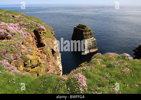 UK Scotland Highland Caithness The Pentland Firth and Rock Stack at Duncansbyhead - Stock Photo