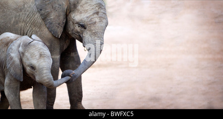 Mother with baby elephant (Loxodonta africana), Kruger National Park, Mpumalanga Province, South Africa - Stock Photo