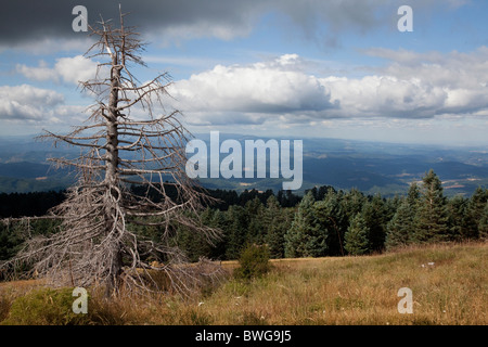 Dead tree on a hill in epic landscape - Stock Photo
