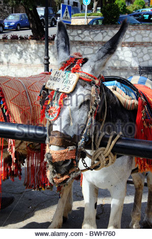 Donkey rides pueblo blanco whitewashed village mijas for Burro blanco