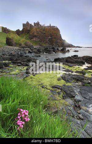 Dunluce Castle, Antrim Coast, Northern Ireland. - Stock Photo