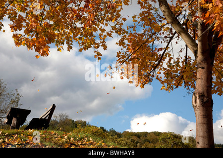 Deciduous tree with falling leaves in autumn in front of a cloudy sky, Rhineland-Palatinate, Germany, Europe - Stock Photo