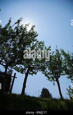 Trees in backlight near casole d'elsa, Tuscany, Italy - Stock Photo