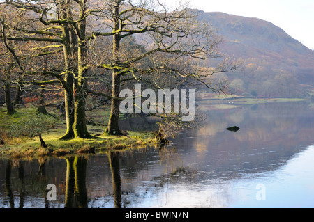 Early morning light on trees by Rydal Water, Lake District - Stock Photo