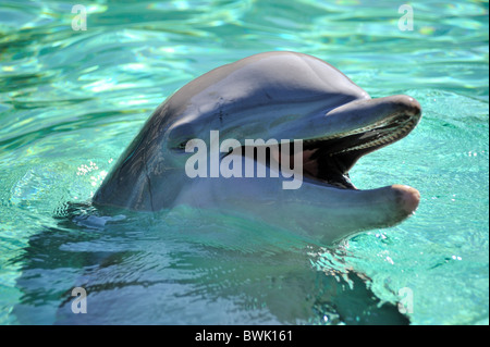 Dolphin with head out of water - Stock Photo