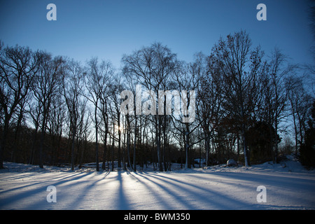 Silhouetted trees casting long shadows on a snowy field - Stock Photo