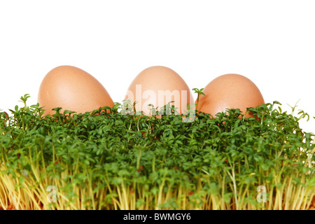 Fresh green cress and three easter eggs isolated on white background - Stock Photo