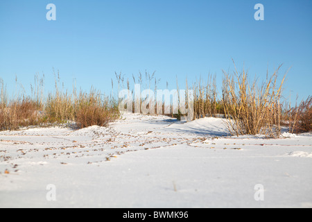 Natural landscape along Florida's Gulf Coast. - Stock Photo