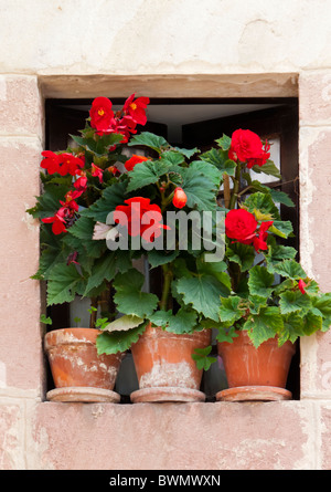 geranium plants in flower pots on steps on a greek island with stock photo royalty free image. Black Bedroom Furniture Sets. Home Design Ideas