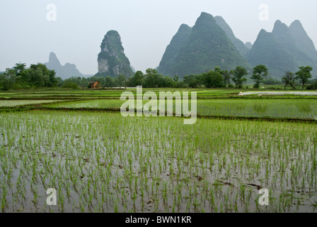 Rice paddies and karst landscape of Guangxi, China - Stock Photo
