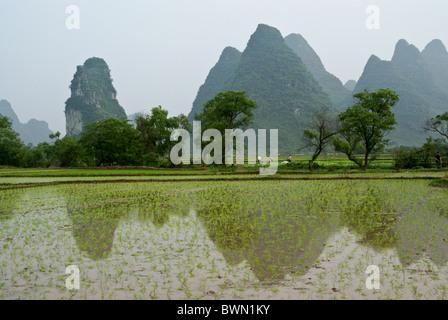 Rice paddies and karst landscape of Guangxi, China - Stock Photo